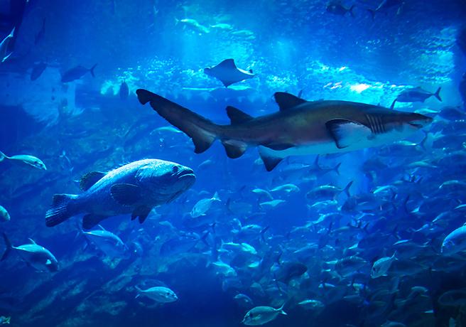 鴨川シーワールドもオススメ! 水族館を利用したプロポーズ方法
