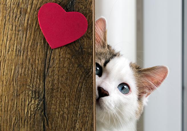ハートマークの木から覗く猫