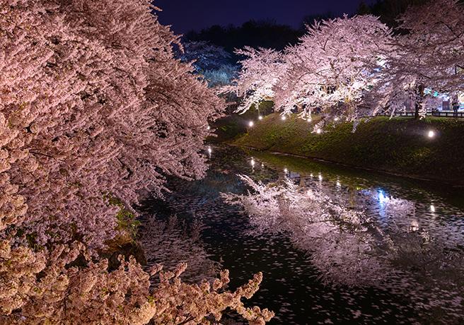 春だからこそ! 幻想的な「夜桜プロポーズ」をしよう!