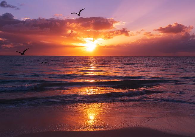 夕日をバックに! ロマンチックなプロポーズ演出と夕日スポット