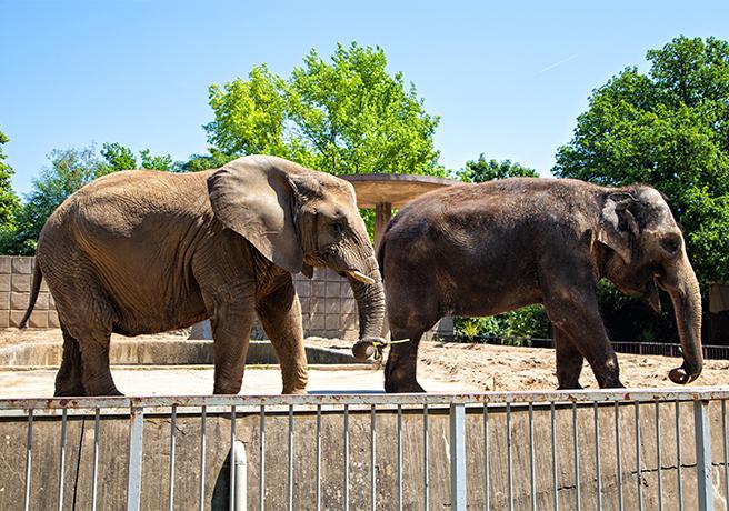 象が愛のキューピット!? 動物園の感動プロポーズ演出