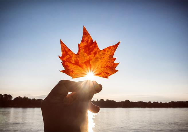 太陽に照らす紅葉
