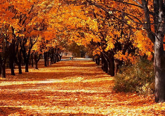 秋のプロポーズは紅葉の中で! 東京でおすすめのスポット3選
